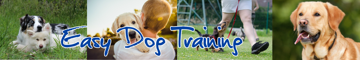 Dog and Puppy Training Tips